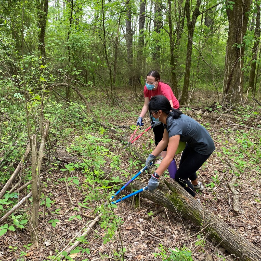 Students trim and lop invasive species in Walnut Creek Wetland Park at a service event in April 2021.