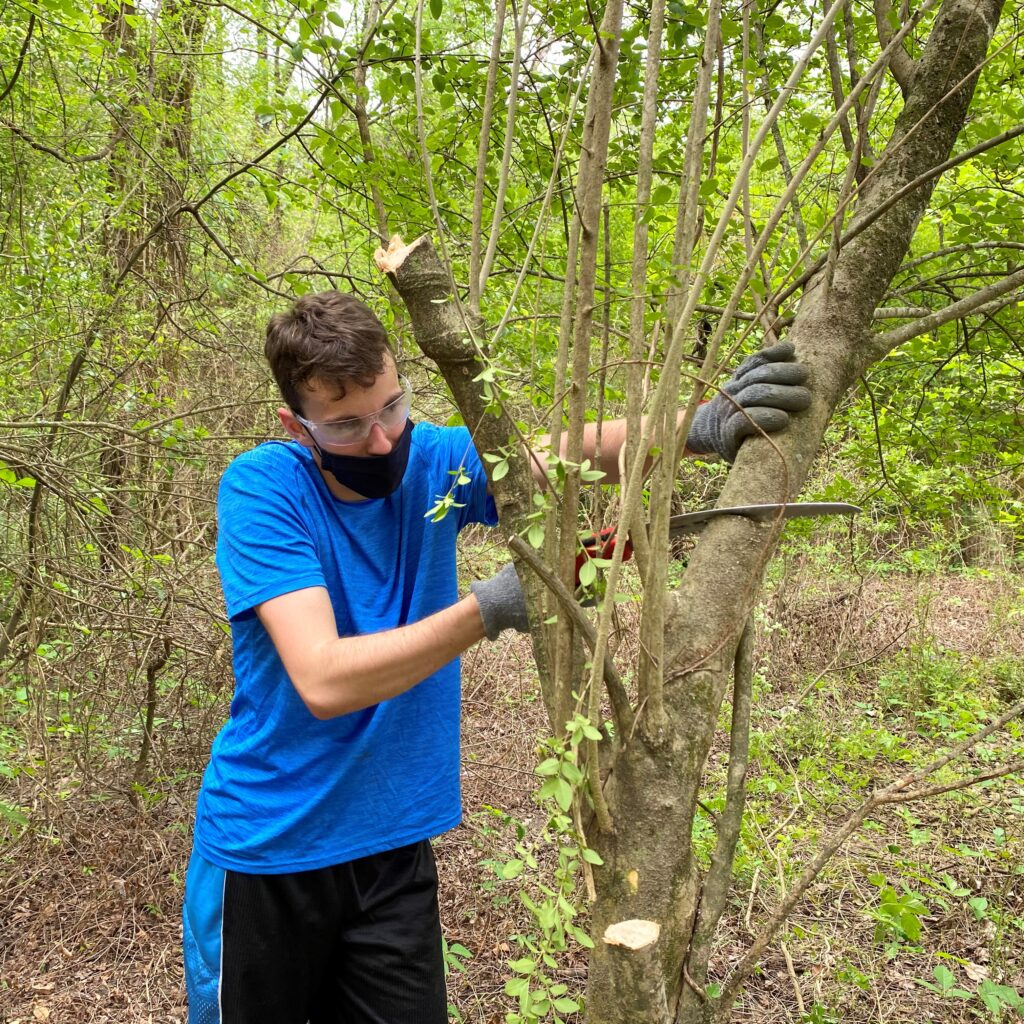 A student cuts down an invasive tree species in Walnut Creek Wetland Park in Raleigh.